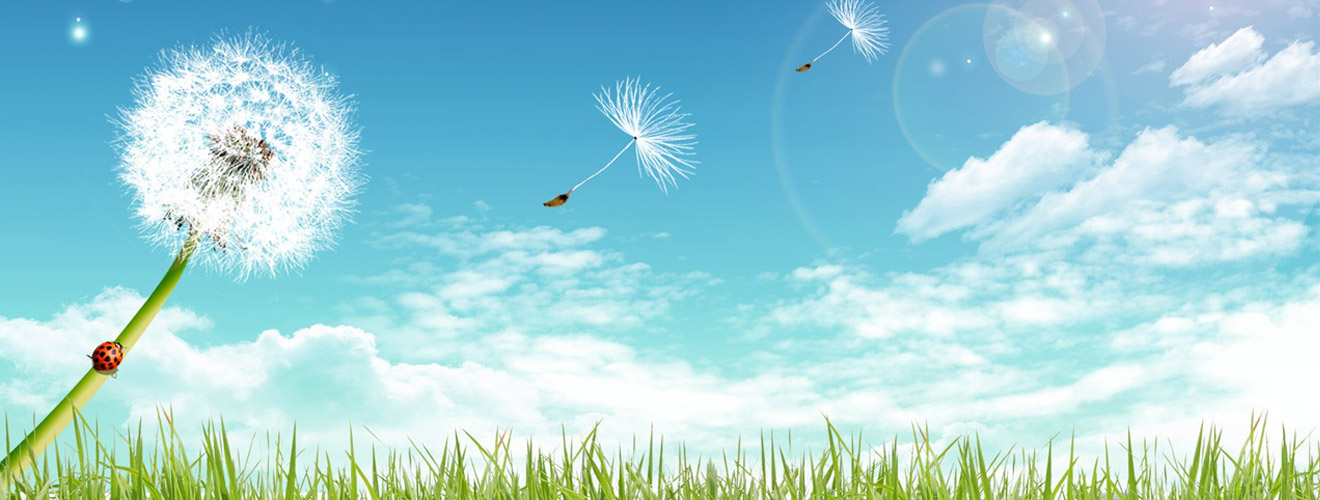 Dandelion with seeds blowing and spreading across a landscape of green grass in foreground and blue sky with clouds in background