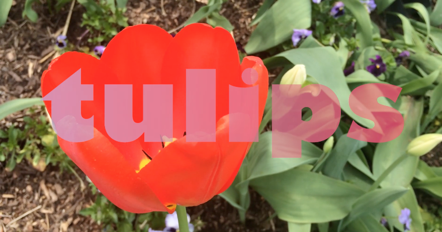 Two Lips Tulips Custom Video for Social Media
